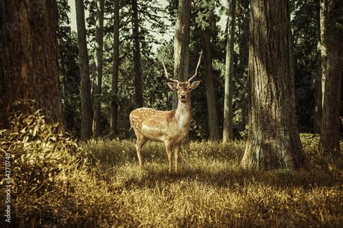 Wallpaper Mural Deer
