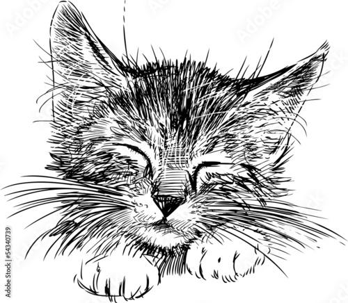 Canvas Print sleeping cat