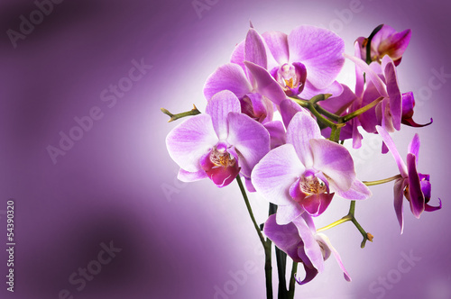 Violet orchid on purple bokeh background
