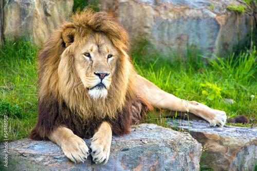 Lion Tapéta, Fotótapéta