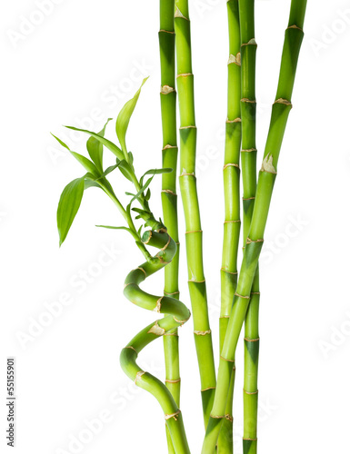 bamboo - six stalks