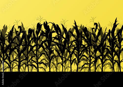 Canvas Print Corn field detailed countryside landscape illustration backgroun
