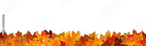 Fotografie, Obraz Seamless pattern of red maple autumn leaves.