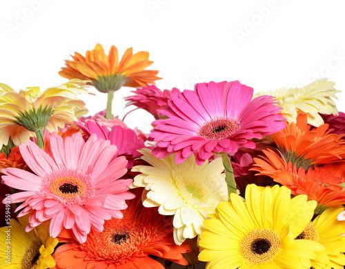Obraz na plátně Bouquet  gerbera flower