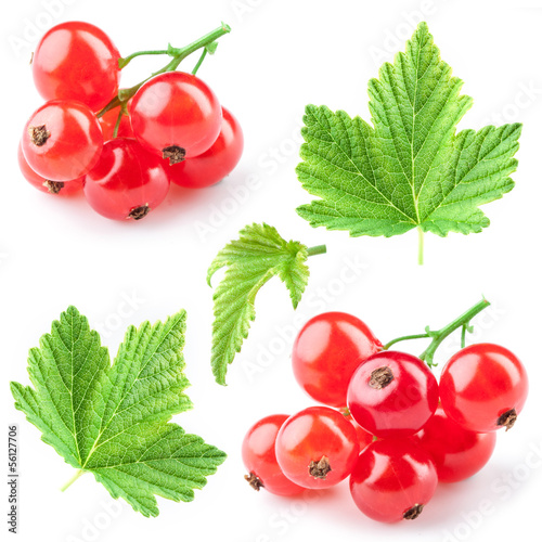 Photo Red currant with leaves. Collection