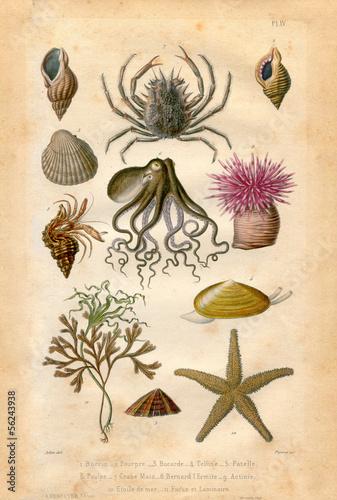 Histoire naturel : Fond Marin