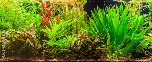 Ttropical freshwater aquarium with fishes #56327916