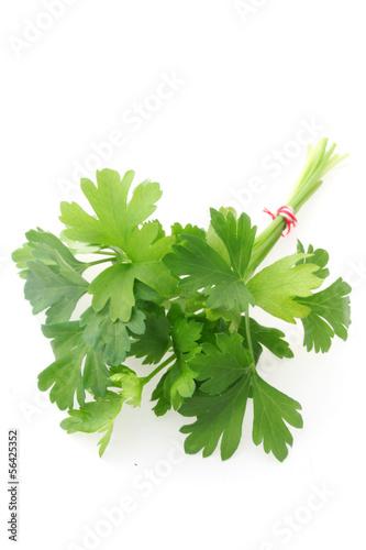 Herb Series: Coriander