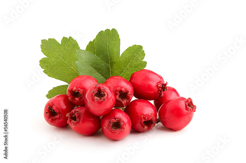 Fotografie, Obraz Red hawthorn berries with leaves.