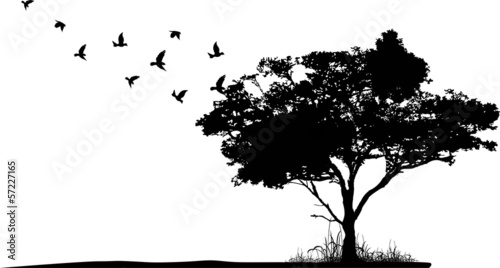 sylwetka drzewa z ptaszki