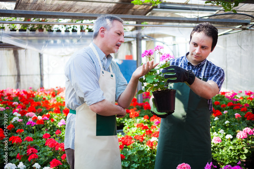 Fotografia, Obraz Greenhouse workers holding flower pots
