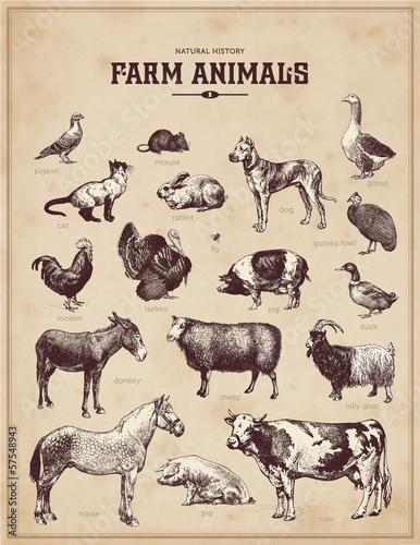 Carta da parati farm animals