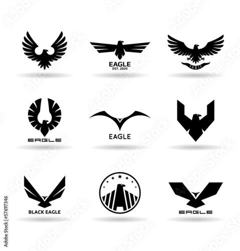 Photo Eagles (10)