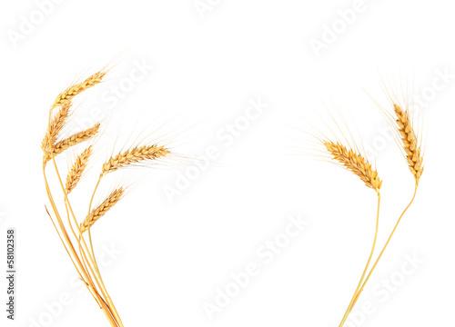 Ears of barley Fototapeta