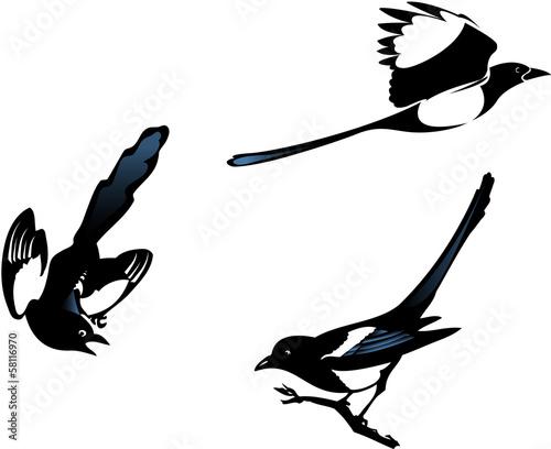Wallpaper Mural Magpies