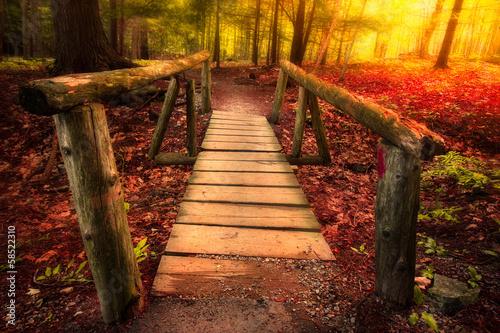 Footbridge path through woods in magical light