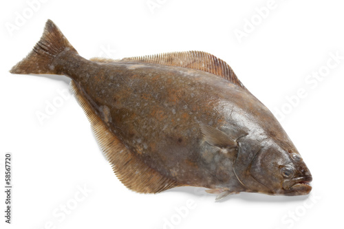 Canvas Print Fresh halibut fish