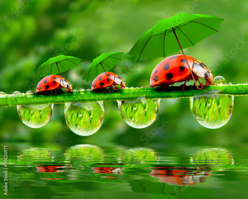 Fotografia Little ladybugs with umbrella.