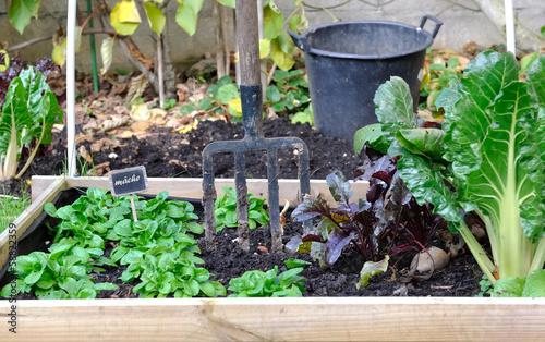 Fototapeta carré de potager et légumes d'automne
