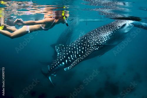 Photo Shark