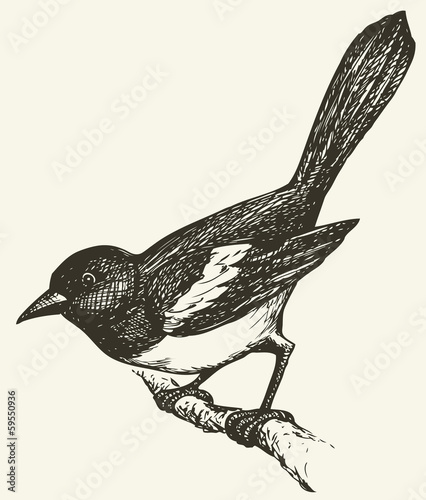 Photo Vector drawing of a series of sketches Birds. Magpie