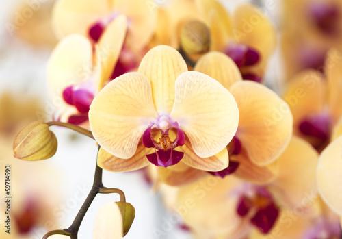 Beautiful yellow orchid