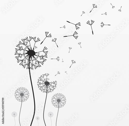 Siedem wektorowych dandelions