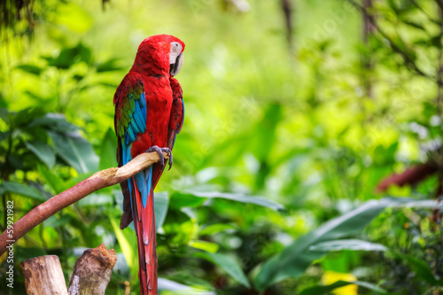 Wallpaper Mural colorfulmacaw sitting in a tree