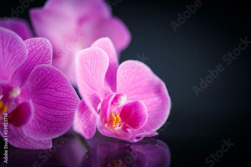 beautiful  Phalaenopsis