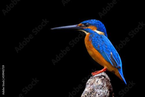 Canvas Print Kingfisher