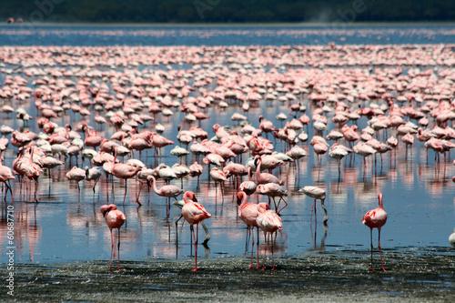 Flamingos in Africa #60687710
