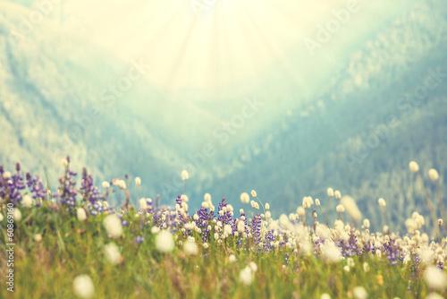 Stampa su Tela Mountain meadow