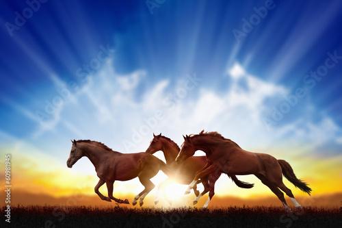 Running horses Fototapeta