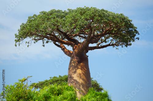 Carta da parati Baobab