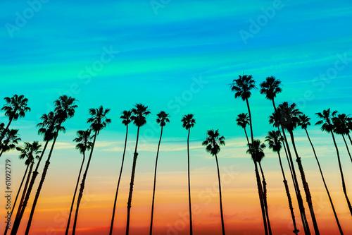 California sunset Palm tree rows in Santa Barbara Tapéta, Fotótapéta