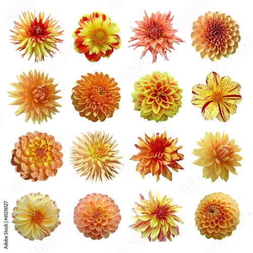 Cuadros en Lienzo collection dahlias jaune orange