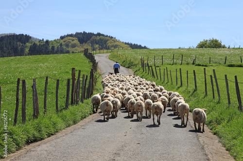 Fotografia ovejas rebaño pastor país vasco 1553-f14