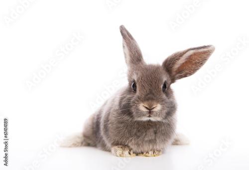 Leinwand Poster Kaninchen