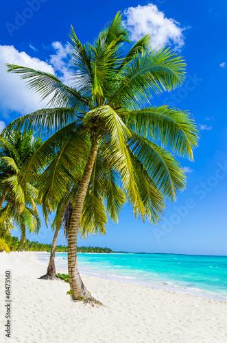 Piaszczysta plaża z palmami, Dominikana na Karaibach