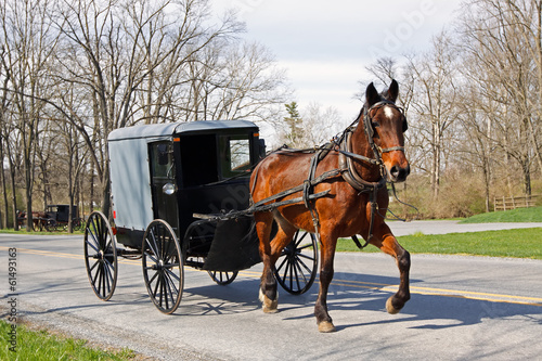 Stampa su Tela Amish Horse and Carriage