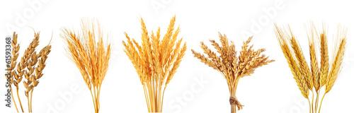 Foto set of various wheat ears