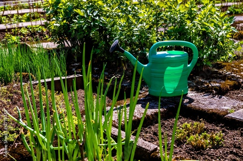 Canvas Print Green watering can and vegetables in the garden.