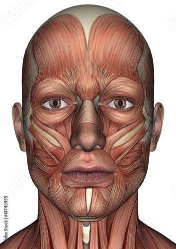 Male Anatomy Face Fototapete