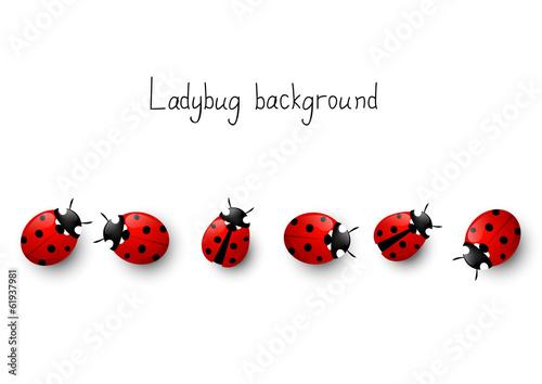 Obraz na płótnie Ladybugs border
