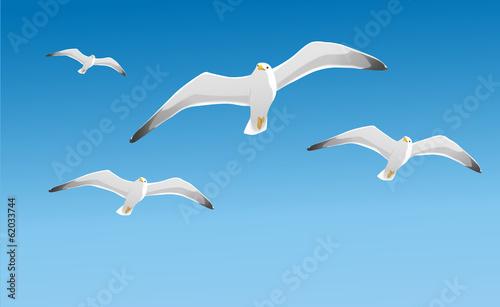 Photo Fliegende Möwen