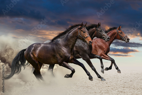 Horses running at a gallop along the sandy field