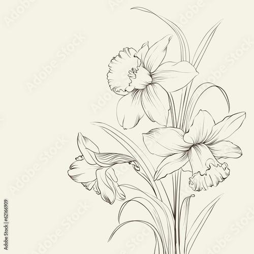 Obraz na plátně tied narcissus flowers isolated on white background