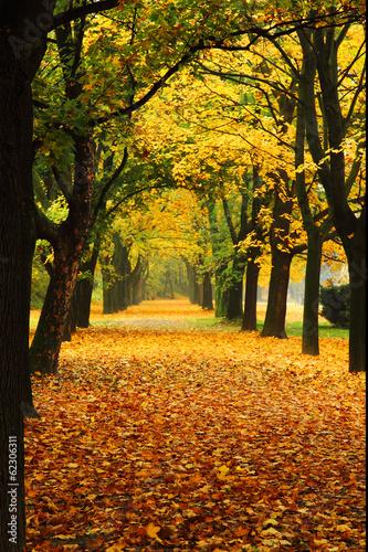 orange autumn in the park #62306311