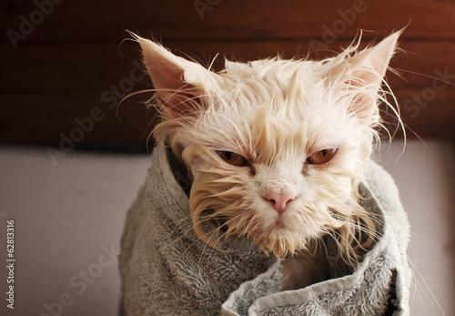 Canvas Wet cat