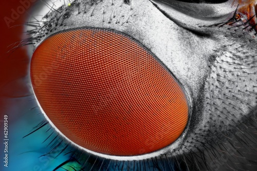 Extreme sharp and detailed fly compound eye surface